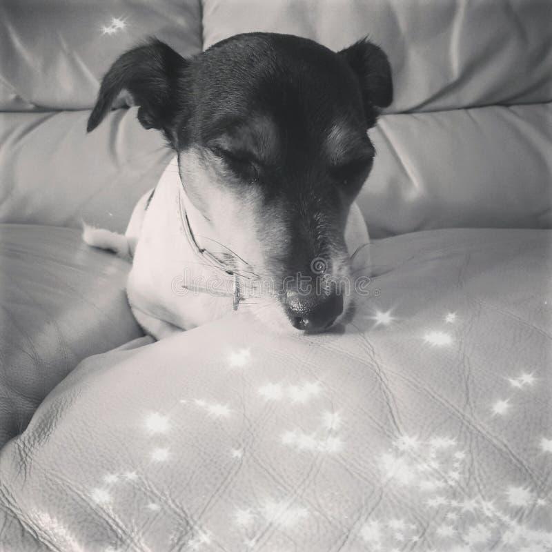 El perrito el dormir fotos de archivo