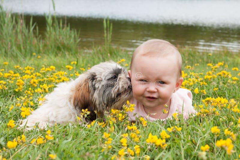 El perrito está lavando al bebé fotografía de archivo libre de regalías