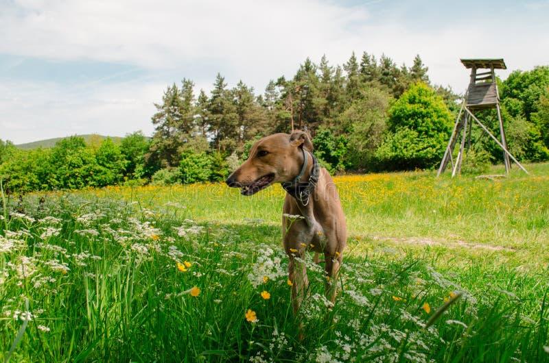 El perrito goza del sol en el prado imagen de archivo