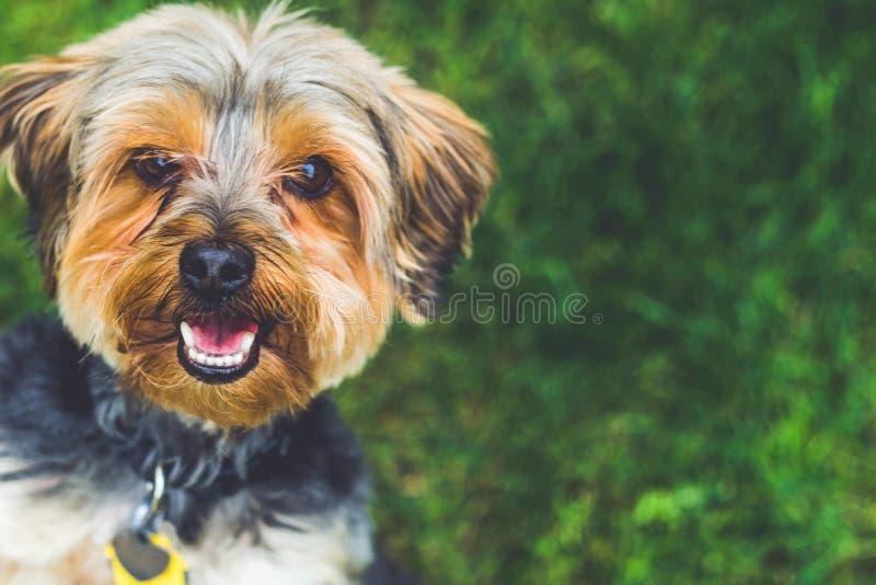 El perrito más lindo más feliz alrededor foto de archivo