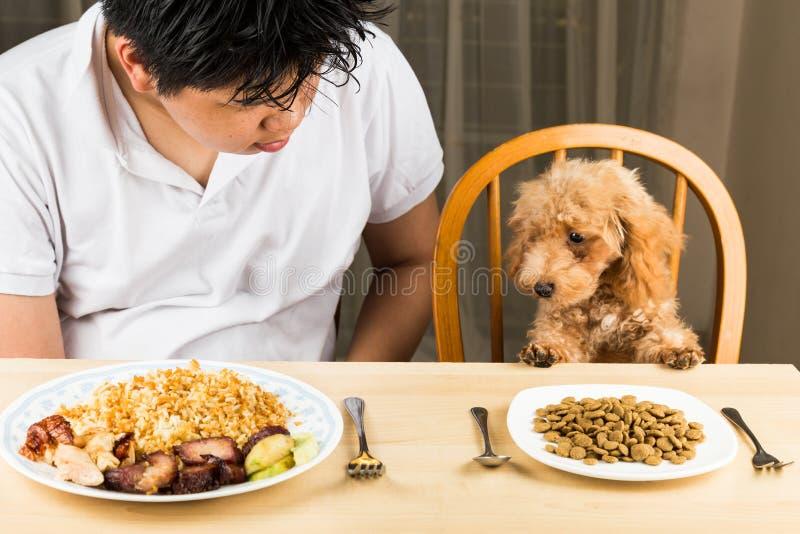 El perrito que observa la placa del arroz y la carne en los adolescentes platean y muestran que ningún interés en su placa de no  fotos de archivo