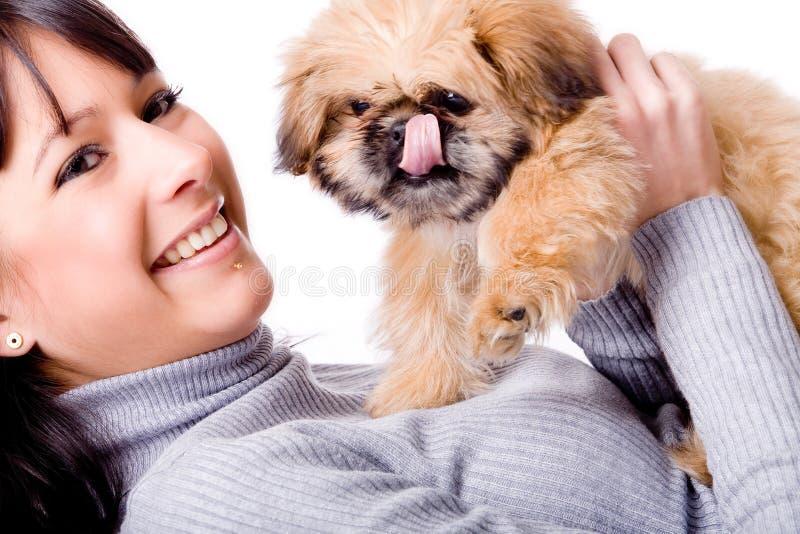 El perrito se está lamiendo imagen de archivo libre de regalías