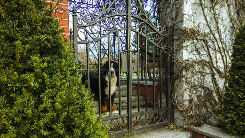 El perro foto de archivo libre de regalías