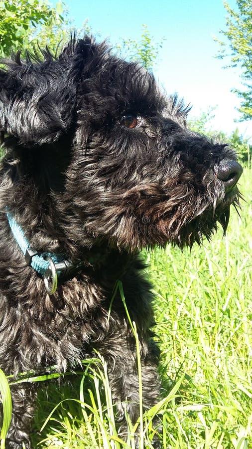 El perro fotografía de archivo