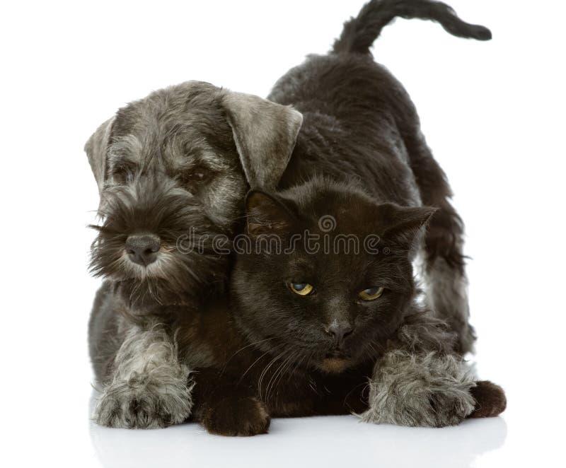 El perro abraza un gato. imágenes de archivo libres de regalías