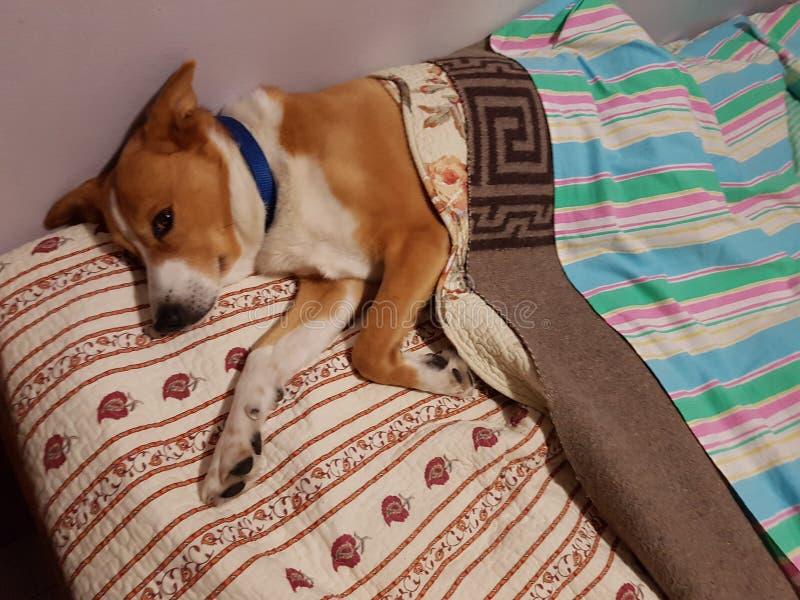 El perro adentro se relaja imagen de archivo libre de regalías