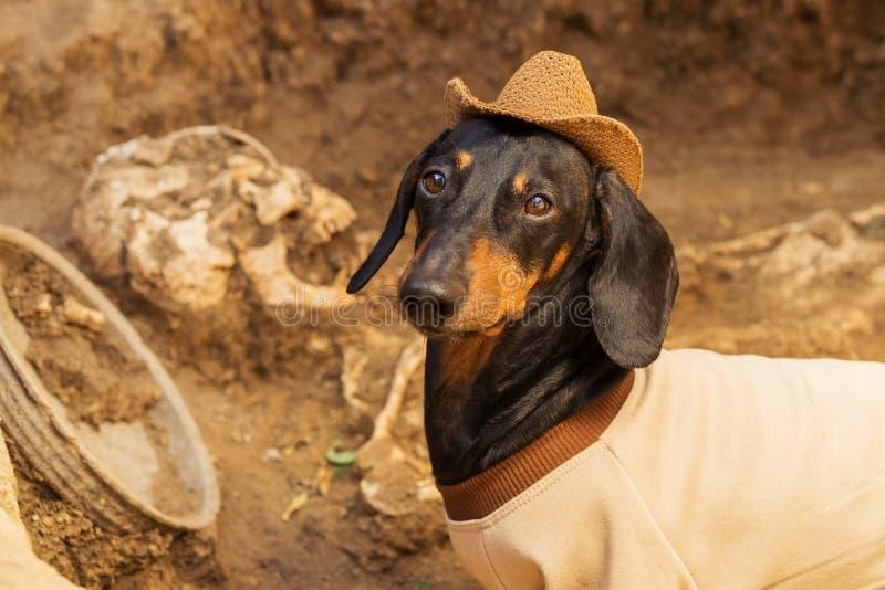 El perro basset del perro, se ennegrece y broncea, en la ropa de un arqueólogo y de un sombrero en excavaciones arqueológicas con foto de archivo