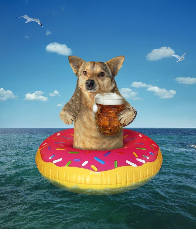 El perro bebe la cerveza en el buñuelo inflable foto de archivo libre de regalías