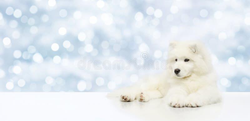 El perro casero aislado en la Navidad empañó el fondo de las luces, templat foto de archivo libre de regalías