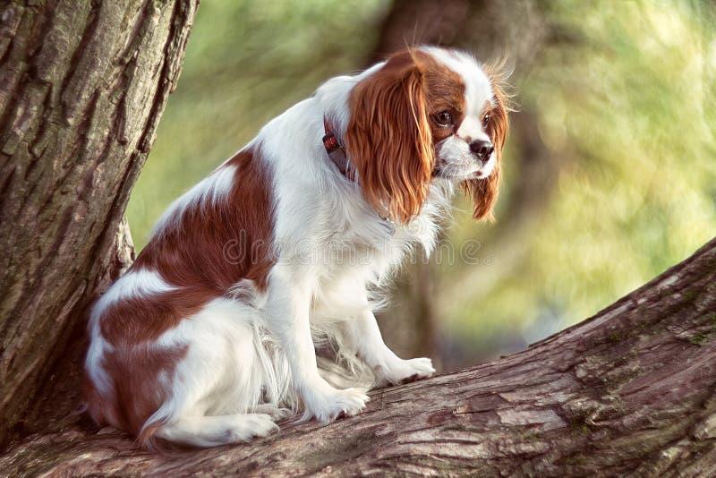 El perro cocker spaniel se sienta en un árbol y miradas en perfil imagenes de archivo