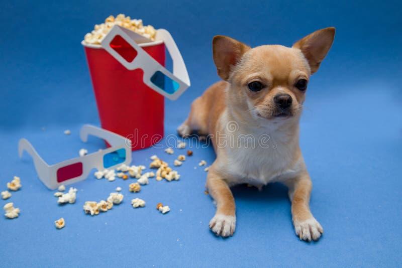 El perro con los vidrios para ver las películas estéreas imagen de archivo libre de regalías
