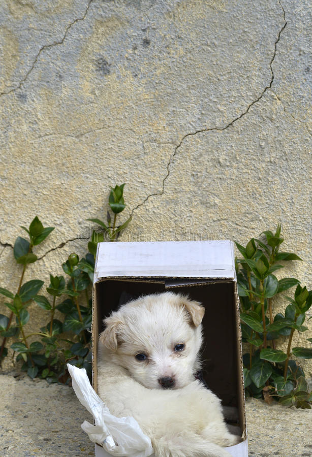 El perro de caniche se fue en una caja de cartón para la adopción imagen de archivo libre de regalías