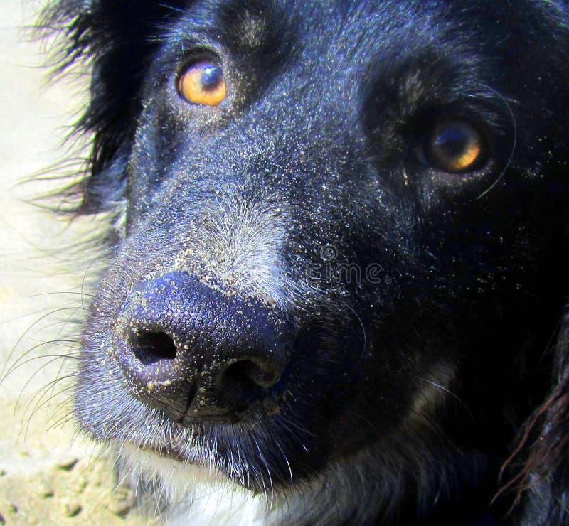 el perro de la playa imágenes de archivo libres de regalías
