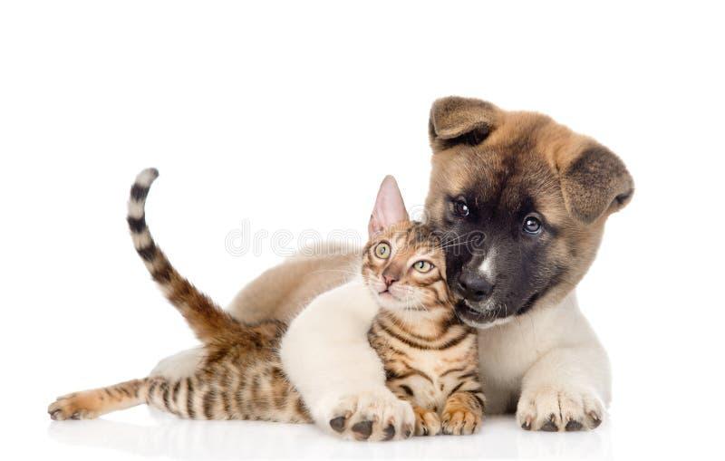 El perro de perrito del inu de Akita abraza el gatito de Bengala Aislado en blanco imágenes de archivo libres de regalías