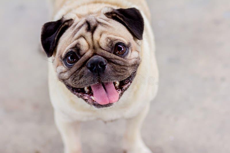 El perro del barro amasado es smliley fotos de archivo