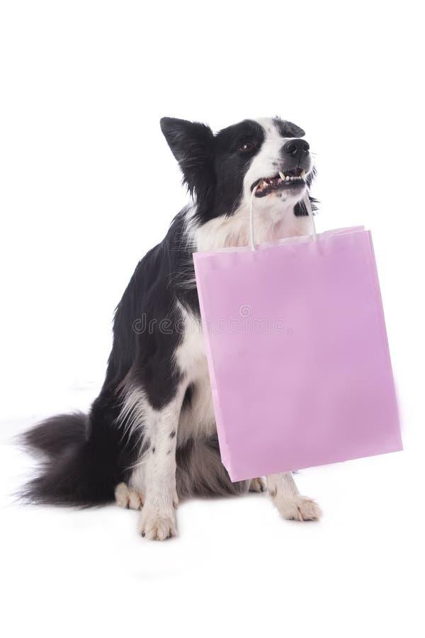 El perro del border collie lleva una bolsa de papel rosada fotografía de archivo
