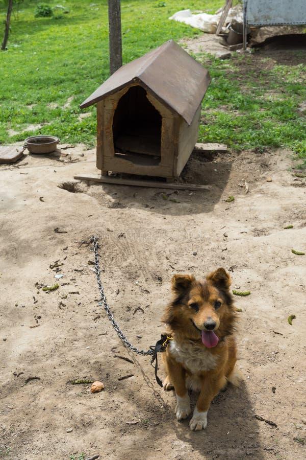 El perro del centinela del guardia de los jóvenes se sienta en una cadena cerca de su casa de perro imagen de archivo