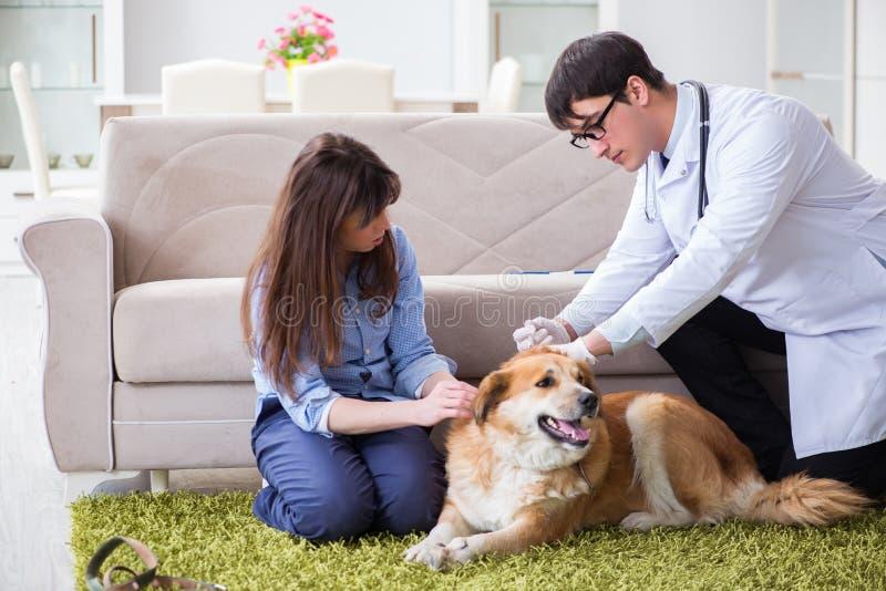 El perro del golden retriever del doctor del veterinario que visita en casa fotos de archivo libres de regalías