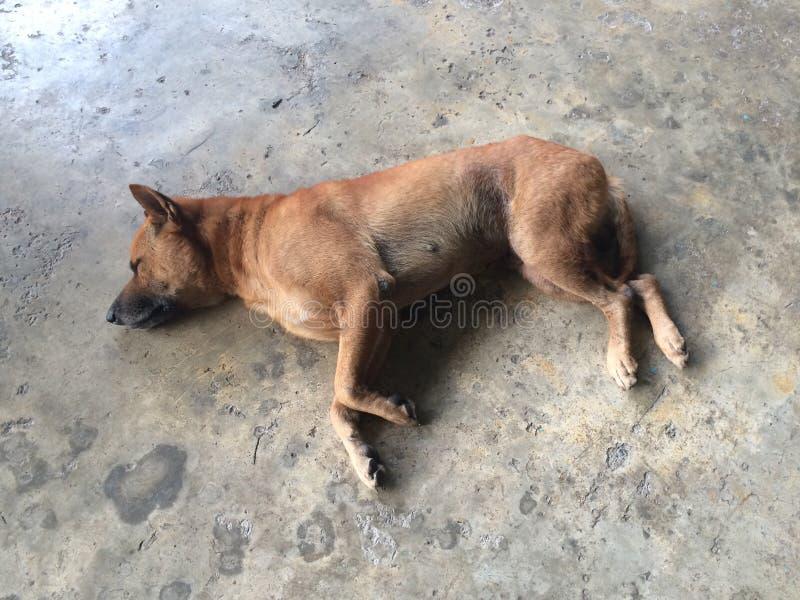 El perro dormía foto de archivo libre de regalías