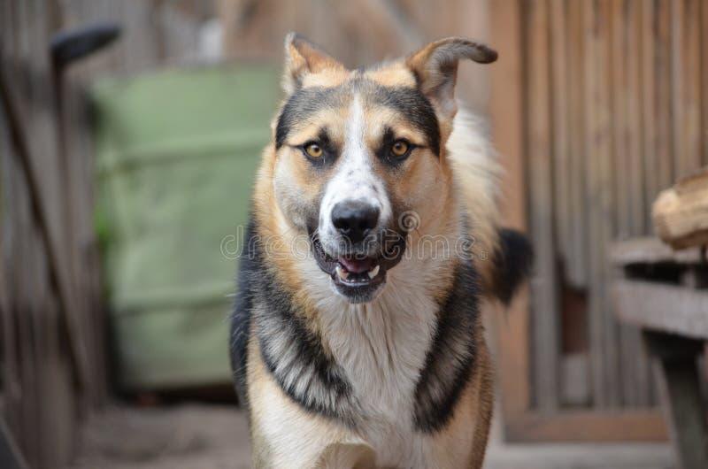 El perro - el mejor amigo del hombre imagenes de archivo