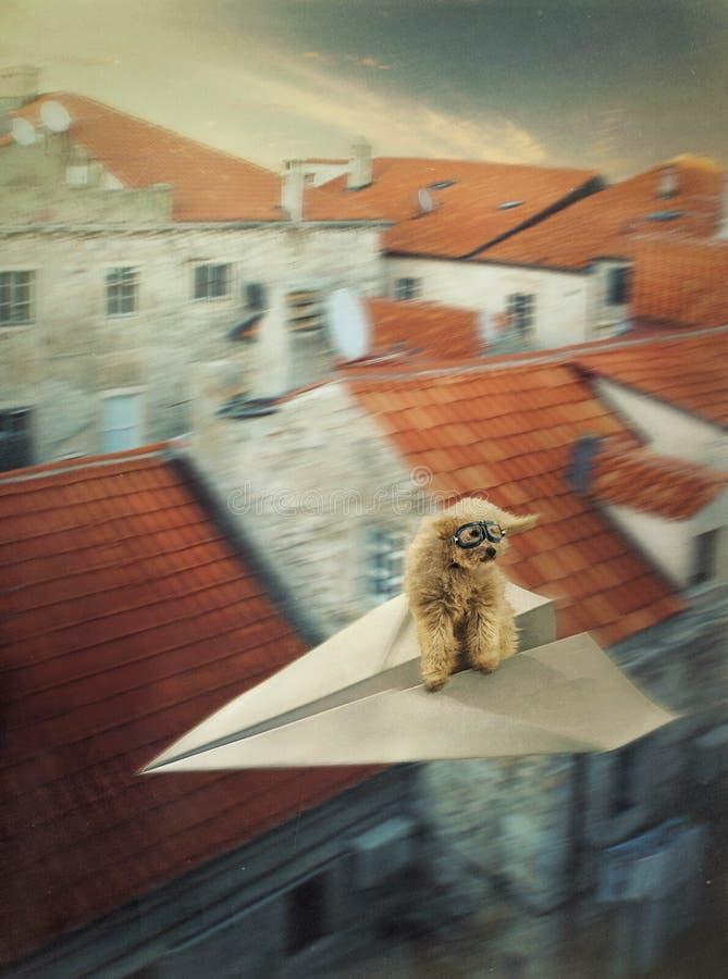 El perro en el avión de papel imagen de archivo libre de regalías