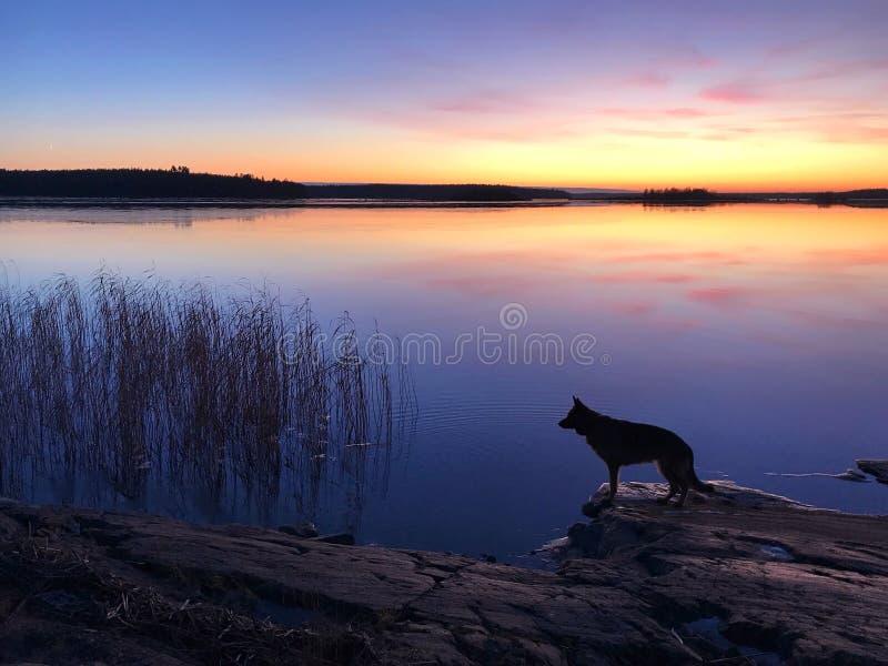 El perro en la playa en la puesta del sol fotos de archivo