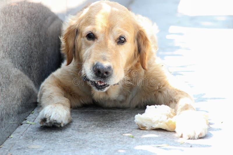 El perro está almorzando en la pobreza fotos de archivo libres de regalías