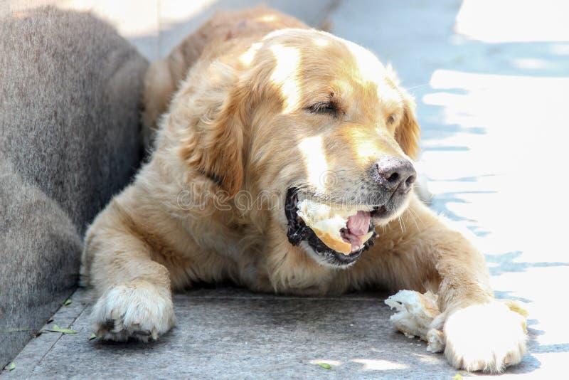 El perro está almorzando en la pobreza fotografía de archivo libre de regalías