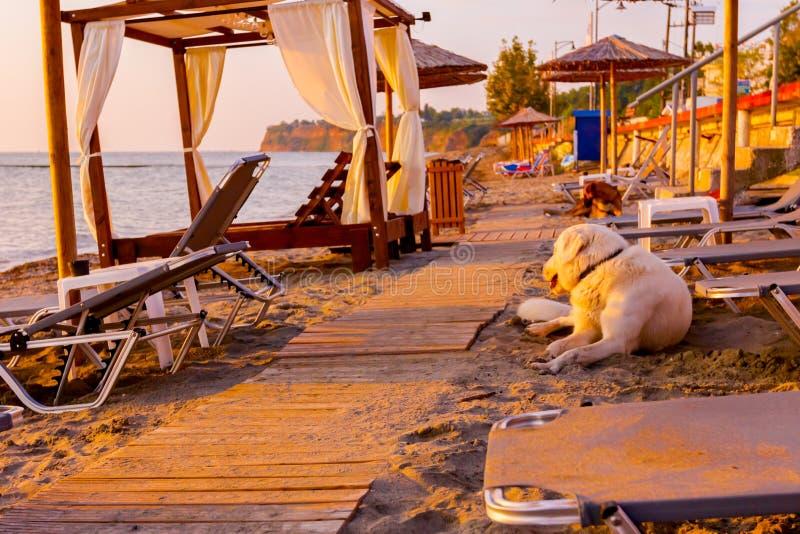 El perro está en la playa arenosa pública vacía en la luz de la mañana foto de archivo libre de regalías