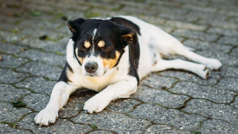 El perro está en la yarda, agotada de calor del verano fotografía de archivo