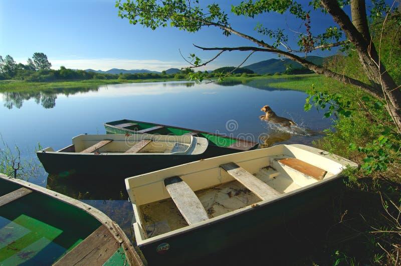 El perro está saltando en el lago imagen de archivo