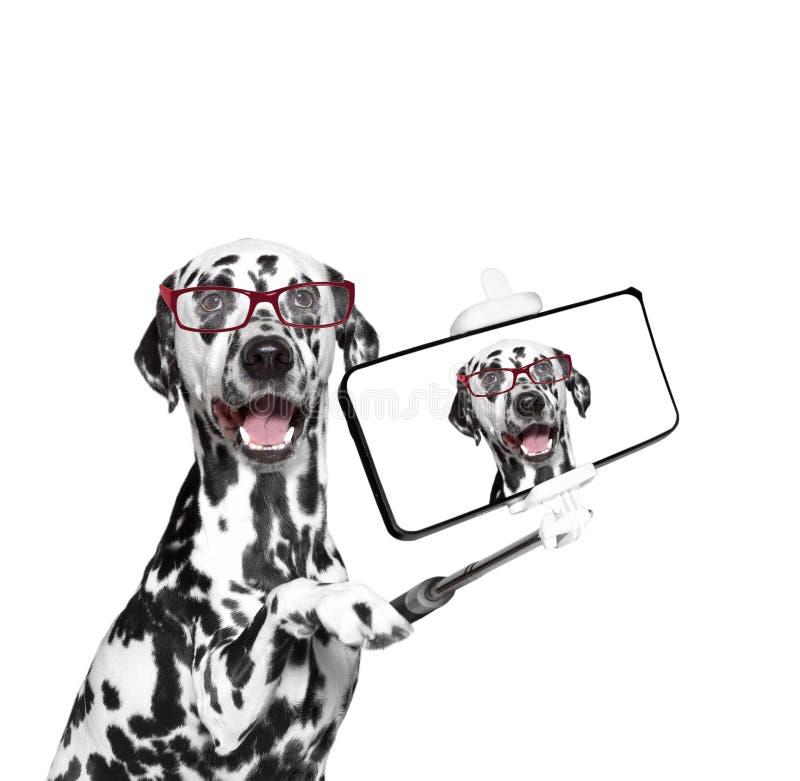 El perro fotografió el selfie en el teléfono fotos de archivo