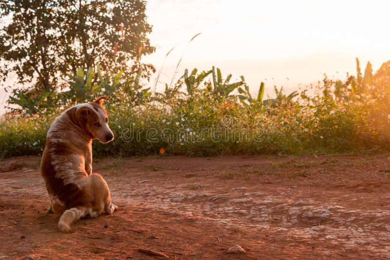 El perro fue criado en la montaña fotografía de archivo