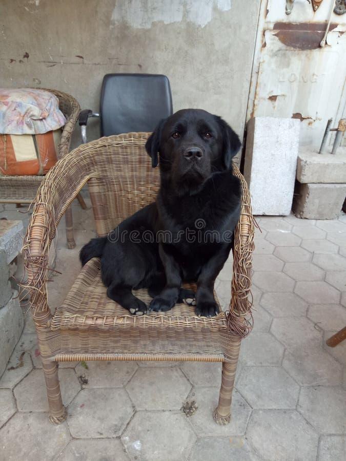 El perro hermoso imagen de archivo libre de regalías