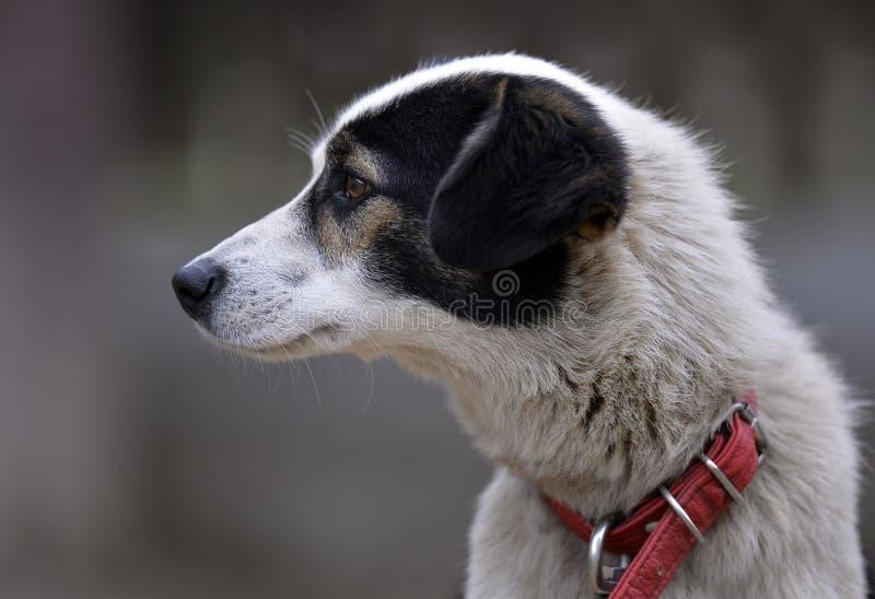 EL Perro Jupe foto de archivo libre de regalías