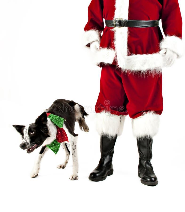 El perro levanta la pierna para hacer pis en Santa Claus fotos de archivo libres de regalías