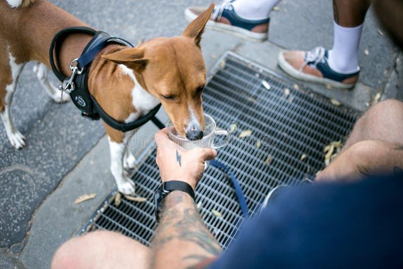 El perro lindo del basenji acaba espuma de la leche del café imagen de archivo libre de regalías
