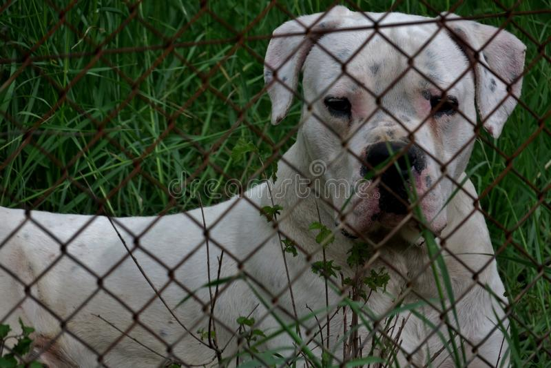 El perro lindo hermoso está guardando la propiedad en el bosque fotos de archivo