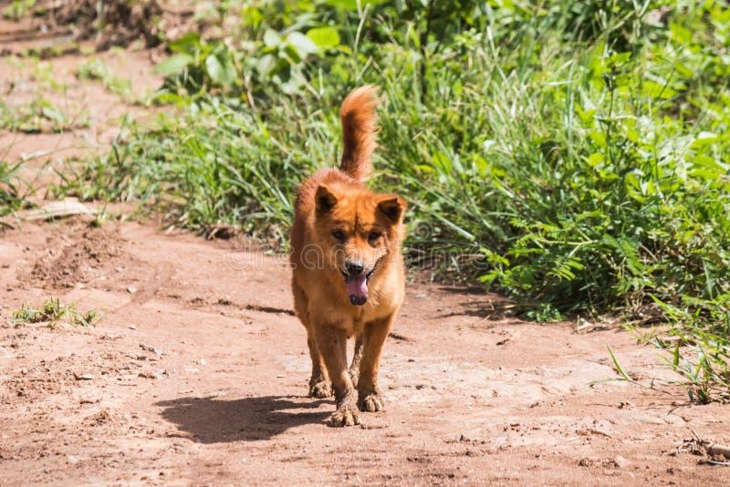el perro local fotos de archivo