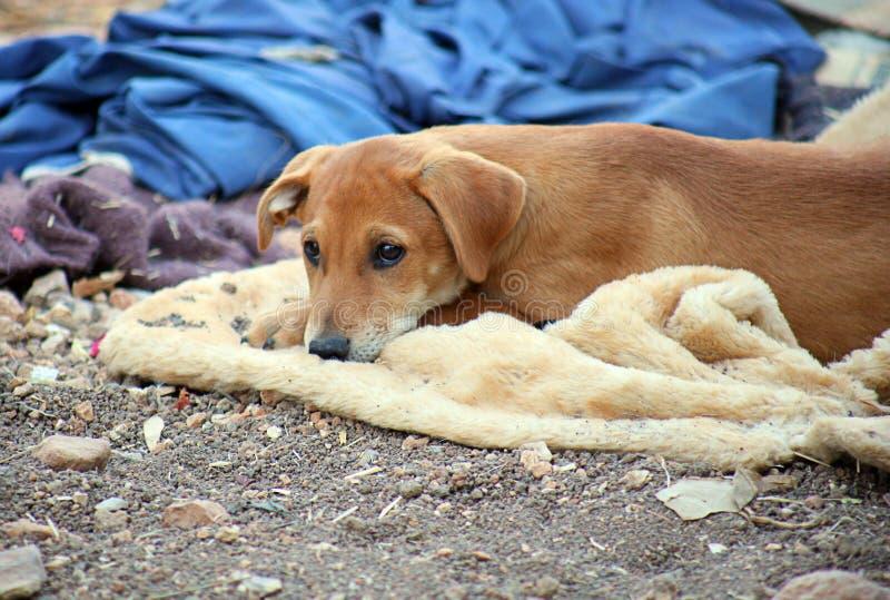 El perro marrón lindo espera afuera fotos de archivo