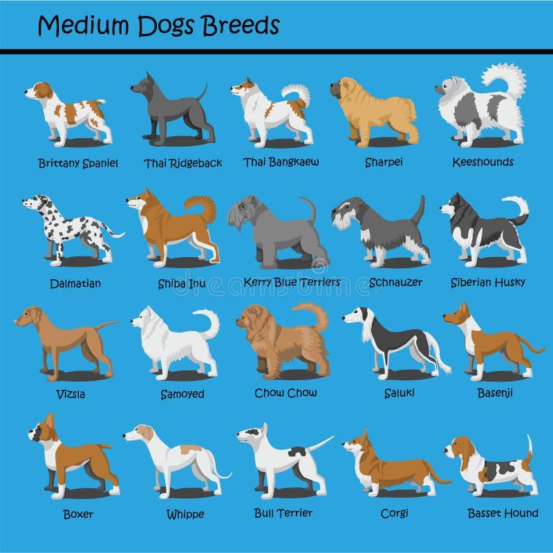 El perro medio cría el perro de perrito lindo del vector del diseño de la historieta del perro que las historietas diseñan stock de ilustración