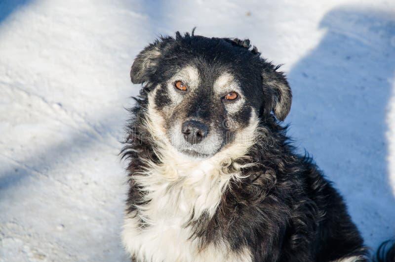 El perro mira en los ojos fotos de archivo libres de regalías