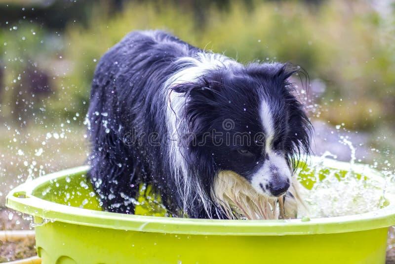 El perro nada en la piscina fotografía de archivo
