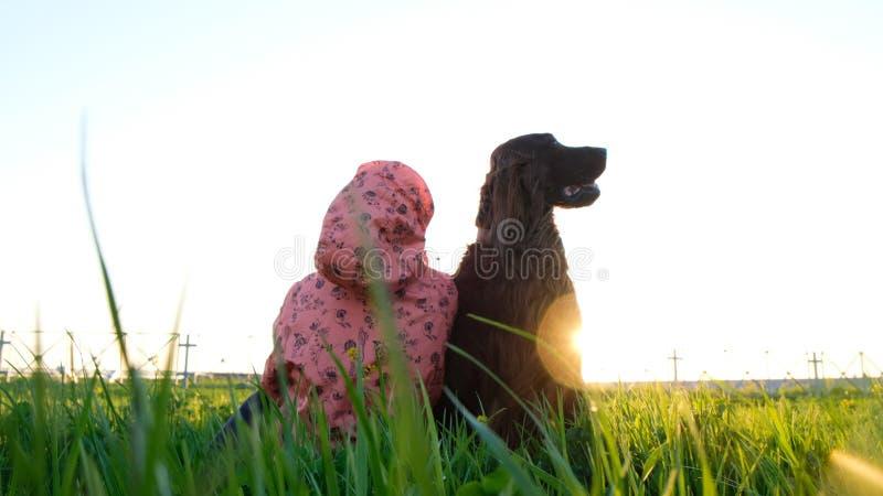 El perro obediente todavía se sienta en la hierba con el dueño de la mujer en la puesta del sol en el verano Irish Setter es el m fotografía de archivo libre de regalías