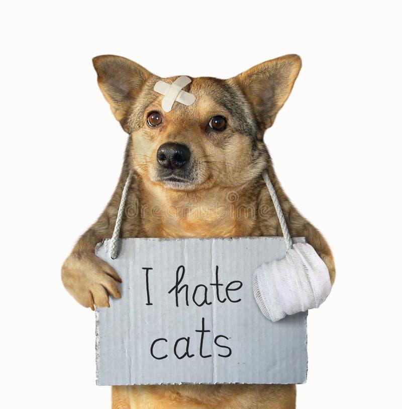 El perro odia los gatos 3 imagen de archivo libre de regalías