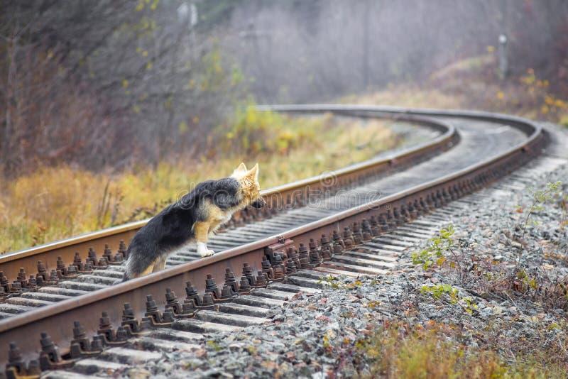 El perro pasa a través del ferrocarril Away_ lejano que va de la pista ferroviaria fotos de archivo