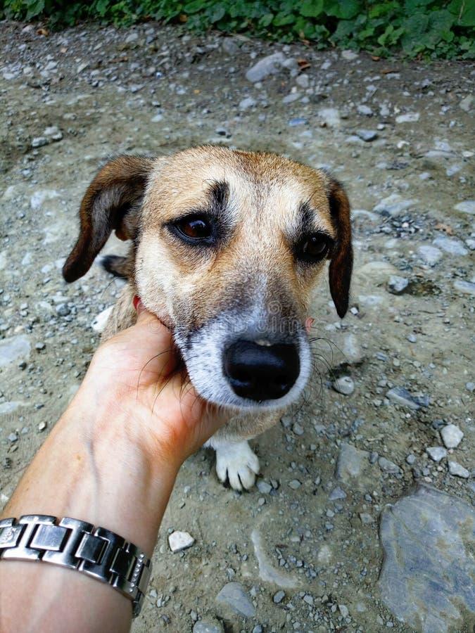 El perro perdido imagenes de archivo