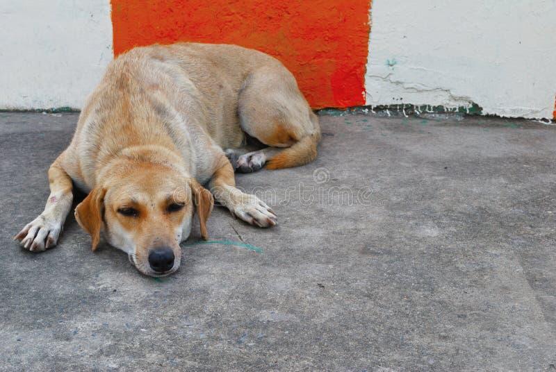 El perro pone completamente en el piso foto de archivo