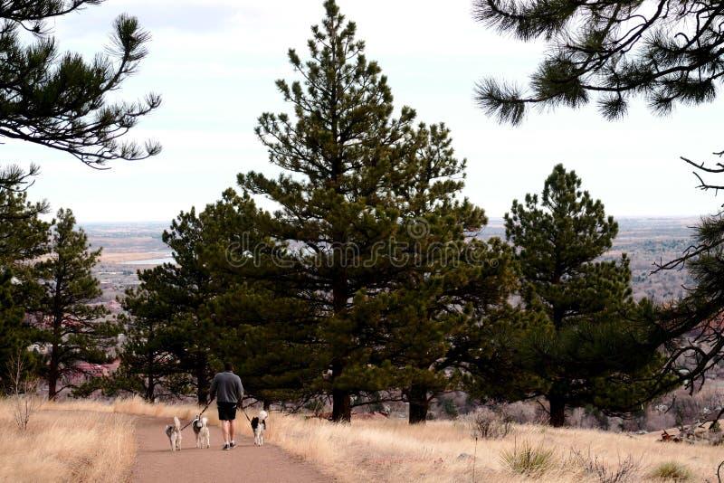 El perro que camina como ejercita diariamente las montañas foto de archivo libre de regalías