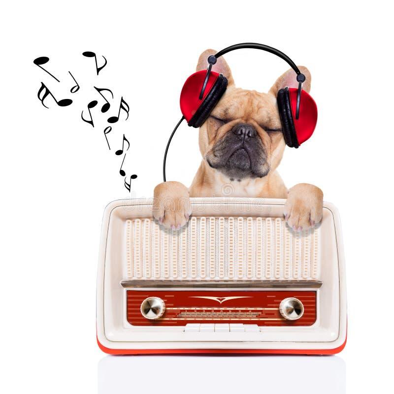 El perro relaja música foto de archivo